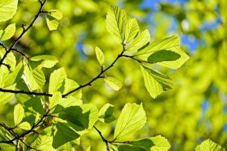 Ciekawostki o drzewach i lasach