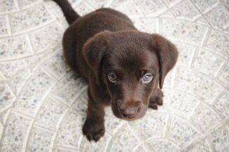 110 ciekawostek na temat psów