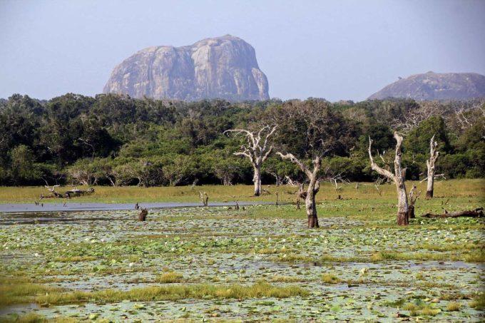 Yala park narodowy