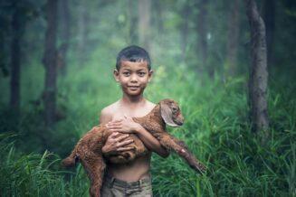 34 ciekawostki o zwierzętach dla dzieci i dorosłych