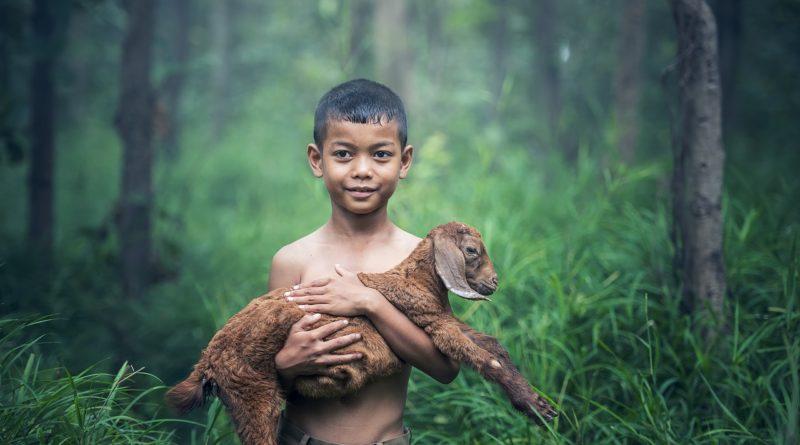 Chłopiec i koza
