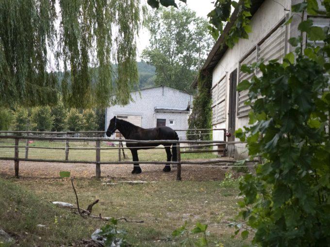 konie na hipodromie