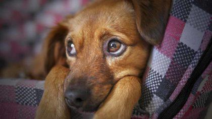 Zaskakujące Ciekawostki o Zwierzętach Domowych