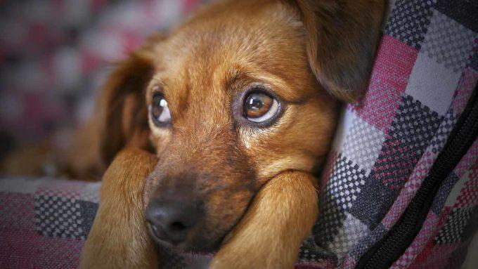 Piękny pies