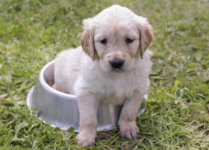 Młody pies