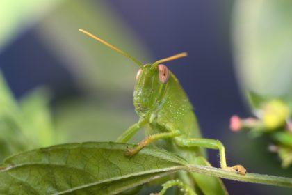 10 niesamowitych ciekawostek o owadach