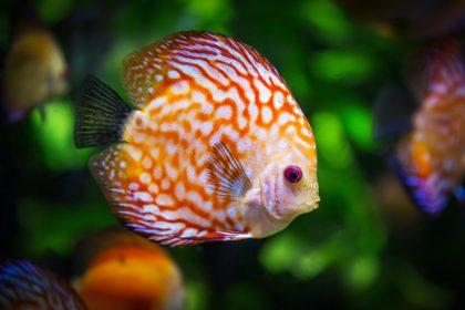 20 ciekawostek na temat ryb