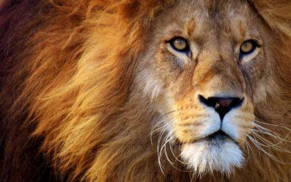 6 niezwykłych ciekawostek o zwierzętach w Afryce
