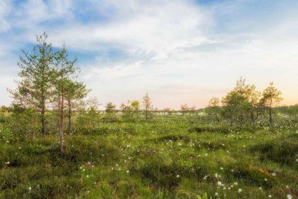 Informacje i ciekawostki o Estonii dla dzieci