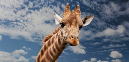 Ciekawostki, fakty oraz informacje o ssakach dla dzieci