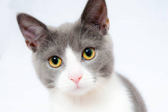 mały kot