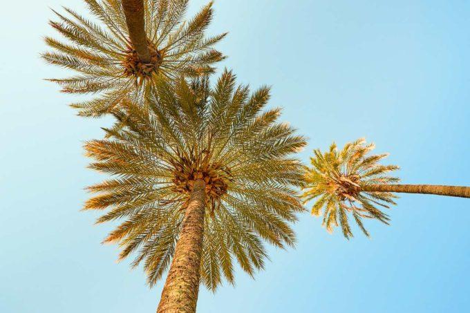 palmy na Fidżi