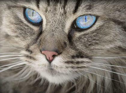 Ciekawostki, fakty oraz informacje o ssakach