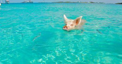Ciekawostki o Bahamach dla dzieci