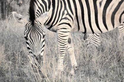 21 najlepszych ciekawostek o RPA dla dzieci