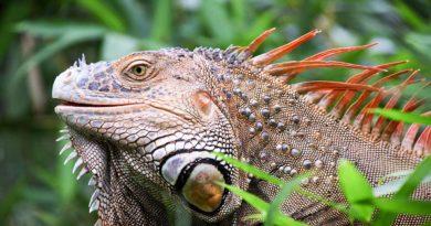 Kostaryka ciekawostki