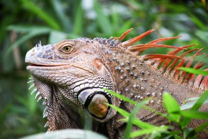 Mało znane informacje i ciekawostki o Kostaryce