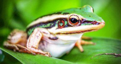 Kostaryka ciekawostki dla dzieci