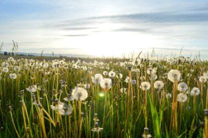 Jak skutecznie poradzić sobie z sezonową alergią?
