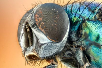 Ciekawostki i informacje o owadach dla dzieci