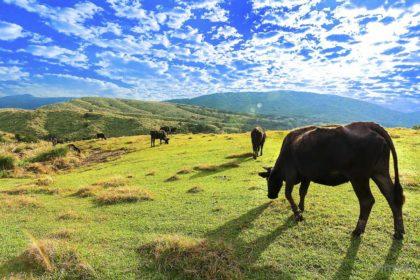 Informacje i ciekawostki o Tajwanie - Piękne zdjęcia z Tajwanu