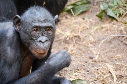 Demokratyczna Republika Konga - Informacje i fakty