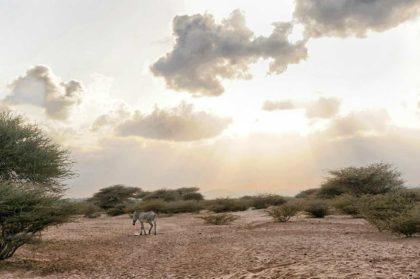 Informacje i mało znane ciekawostki o Dżibuti