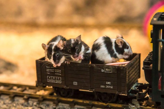 Myszki w wagonie