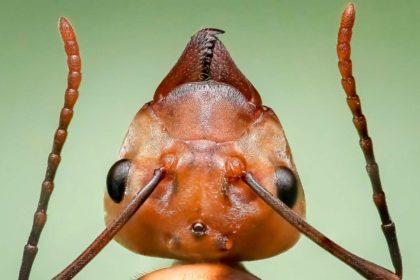 26 informacji i ciekawostek o mrówkach dla dzieci i dorosłych