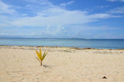 Informacje i ciekawostki o Fidżi dla dzieci