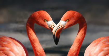 69 Interesujących Ciekawostek o Ptakach