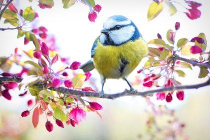 52 Interesujące Ciekawostki o Ptakach dla Dzieci