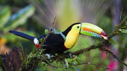 Tukany - Interesujące Ciekawostki dla Dzieci