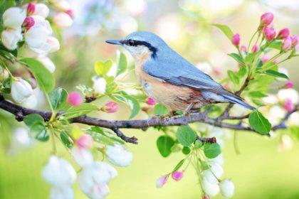 Wiosna ciekawostki - Mało znane informacje o wiośnie dla dzieci i dorosłych
