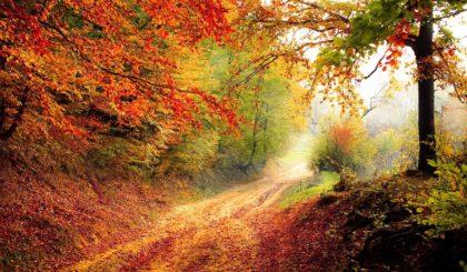10 najlepszych atrakcji dla dzieci jesienią