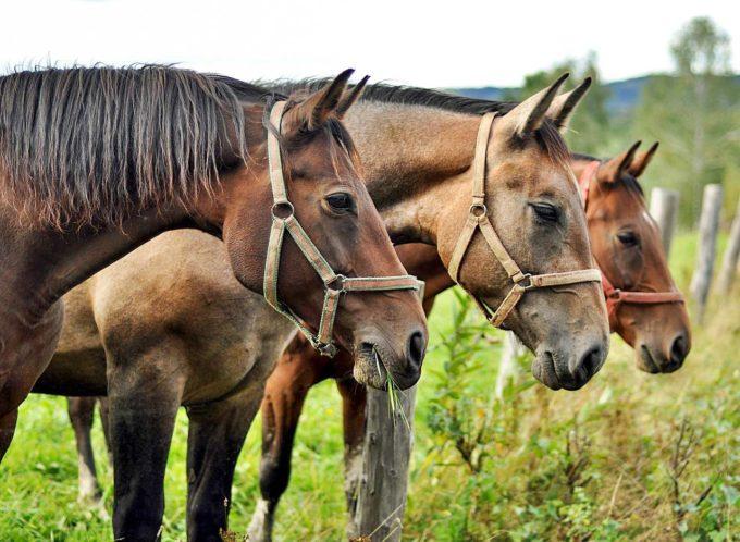 trzy konie