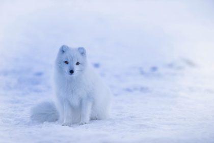10 najlepszych atrakcji dla dzieci zimą