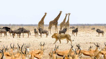 Namibia ciekawostki oraz zaskakujące informacje