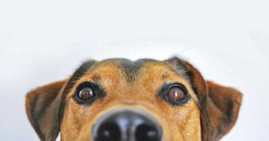 ciekawostki o psach
