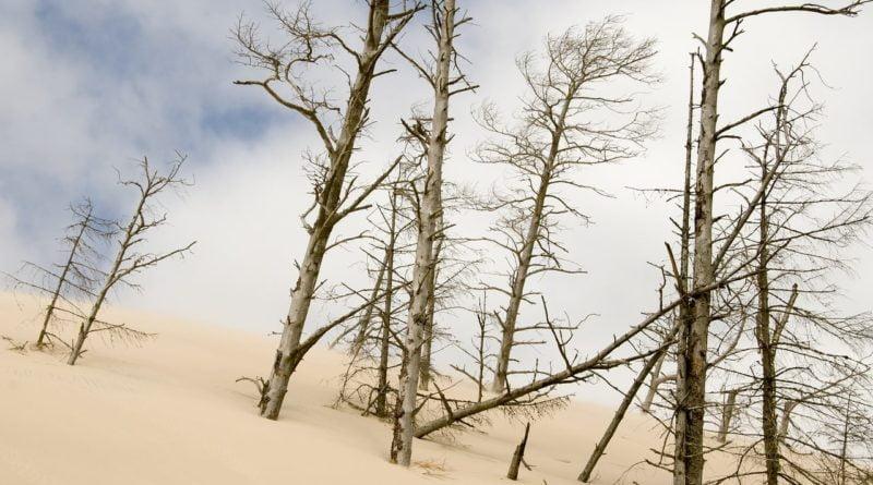 piaskowe wydmy