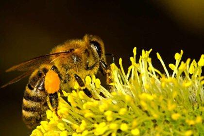 45 ciekawostek o Pszczołach Miodnych