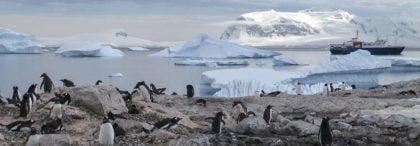 Najlepsze ciekawostki o Arktyce i Antarktydzie