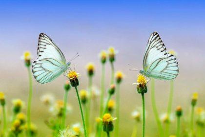 19 ciekawostki o motylach dla dzieci
