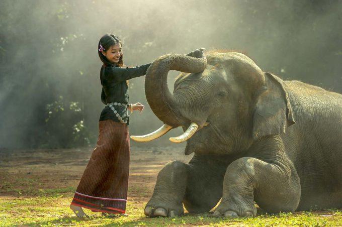dziewczyna obok słonia