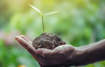 20 ciekawostek ekologicznych dla dzieci