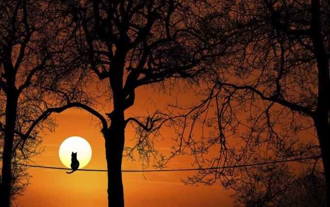 kot i drzewo