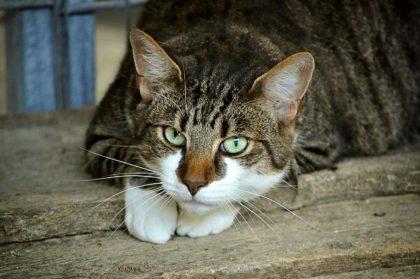 17 ciekawostki dla dzieci o kotach