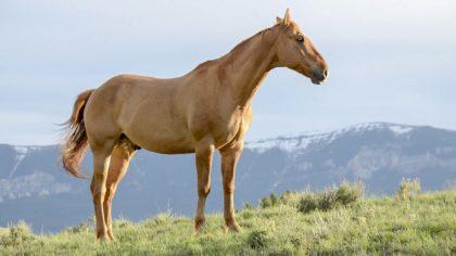 100 niezwykłych ciekawostek o koniach