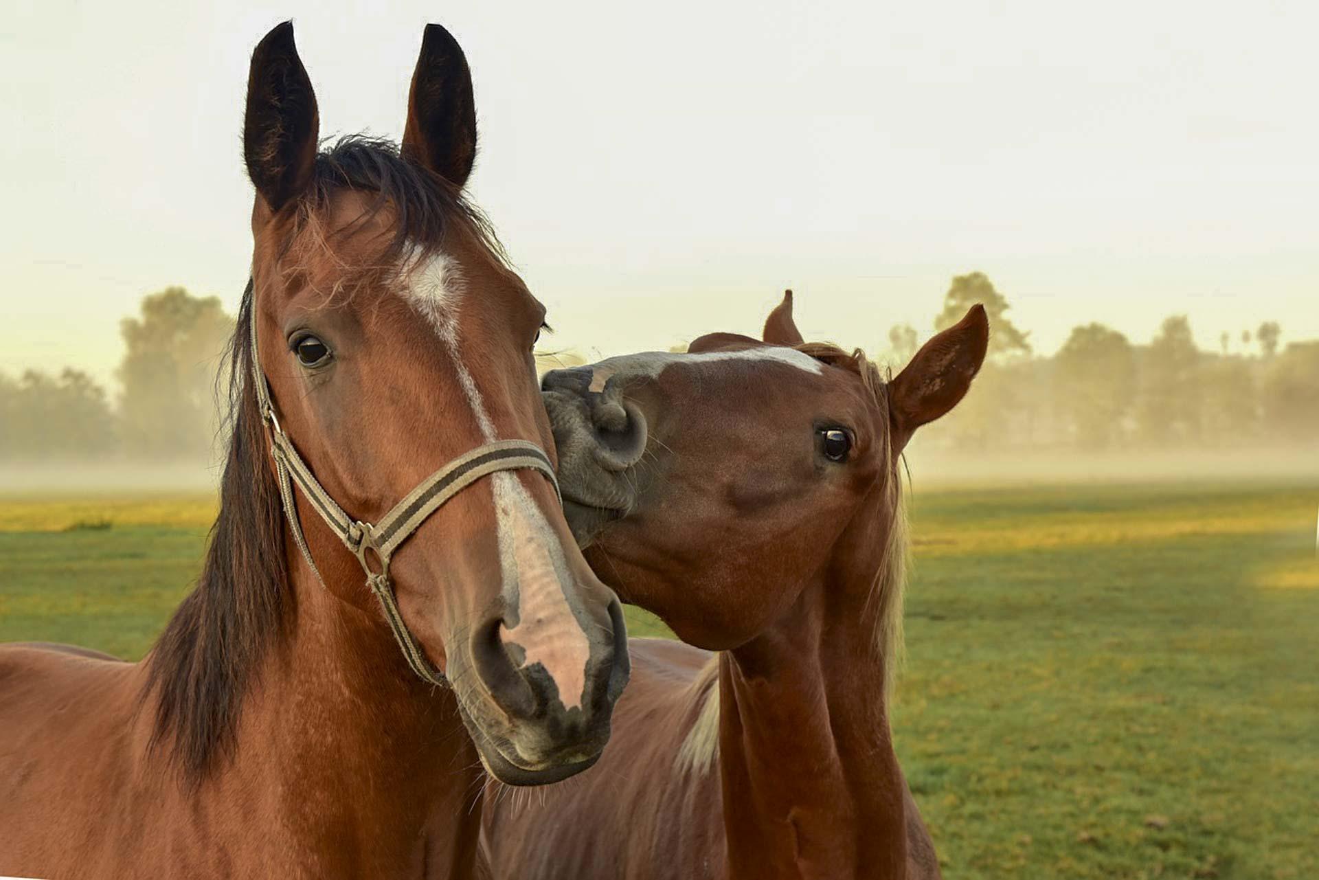 100 Niezwykłych Ciekawostek O Koniach Fajne Podróże