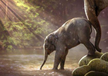 108 ciekawostek o słoniach